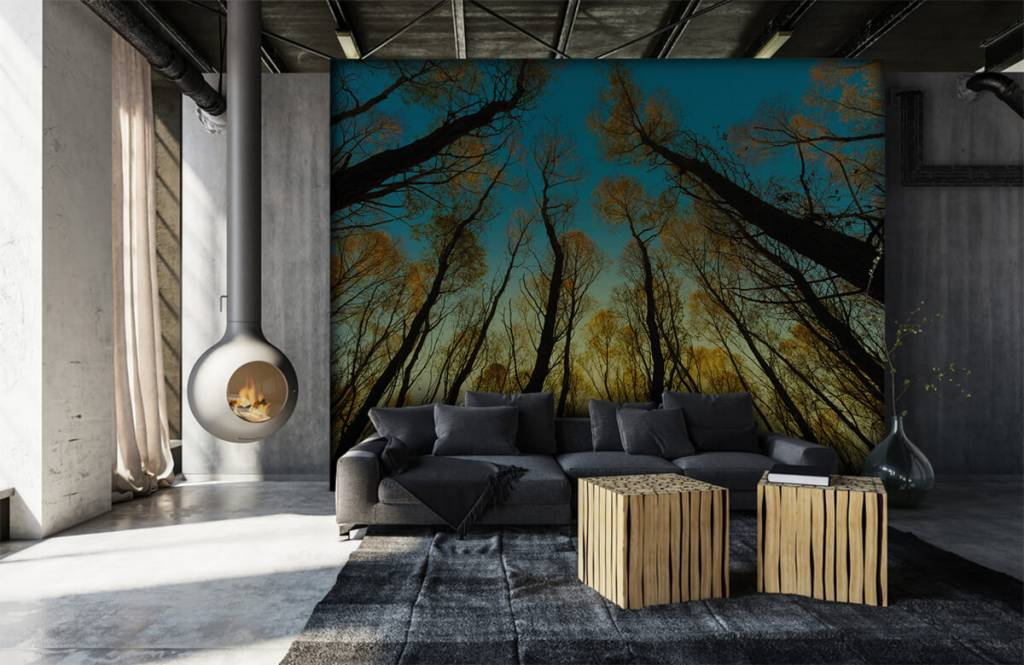 Forest wallpaper - Sunrise between tall trees - Bedroom 6