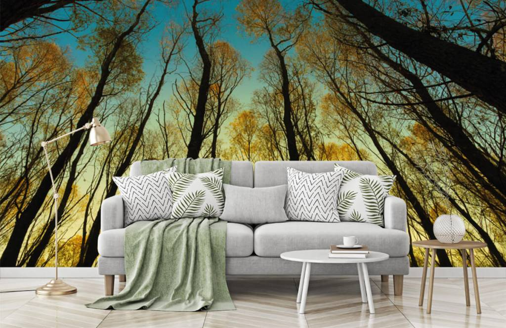 Forest wallpaper - Sunrise between tall trees - Bedroom 7