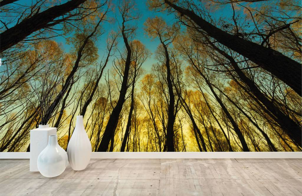 Forest wallpaper - Sunrise between tall trees - Bedroom 8