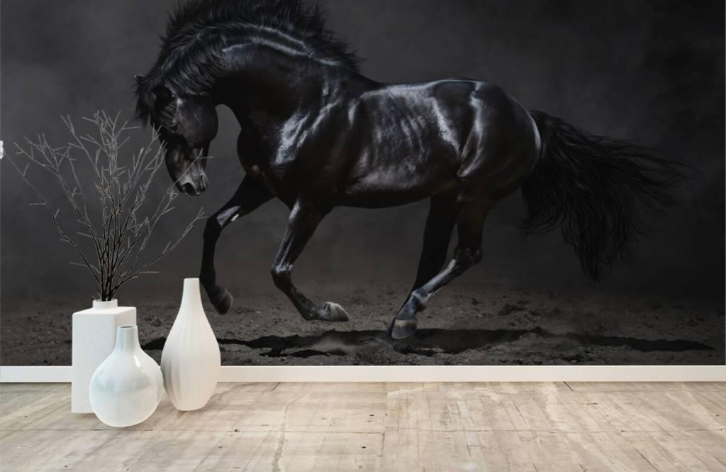 Horses - Black stallion - Children's room 1