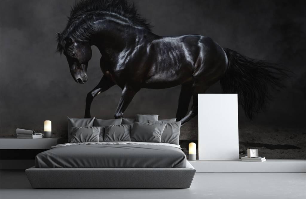 Horses - Black stallion - Children's room 3