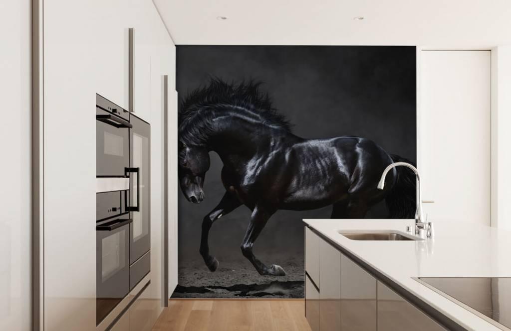 Horses - Black stallion - Children's room 4