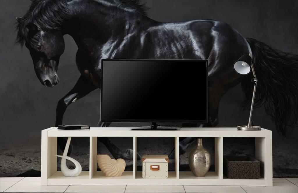 Horses - Black stallion - Children's room 5