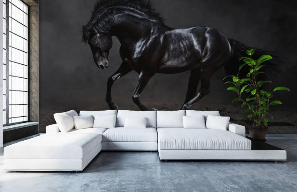 Horses - Black stallion - Children's room 6