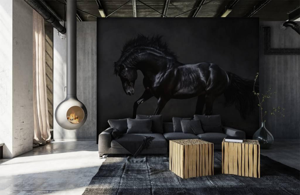 Horses - Black stallion - Children's room 7