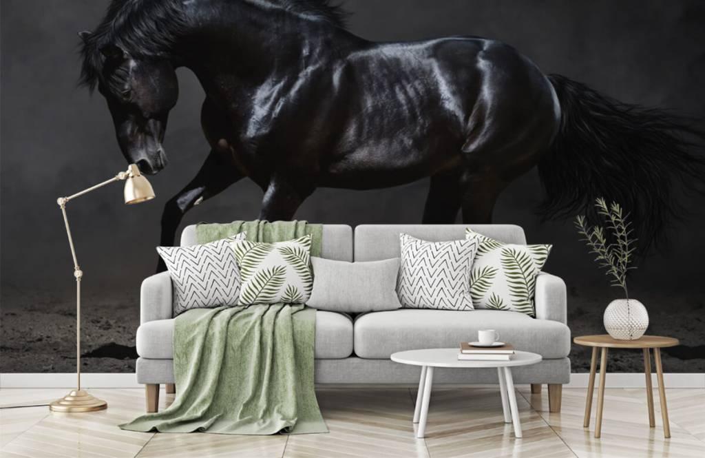 Horses - Black stallion - Children's room 8