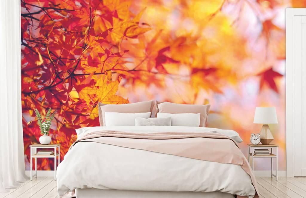 Leaves - Autumn leaves - Bedroom 1