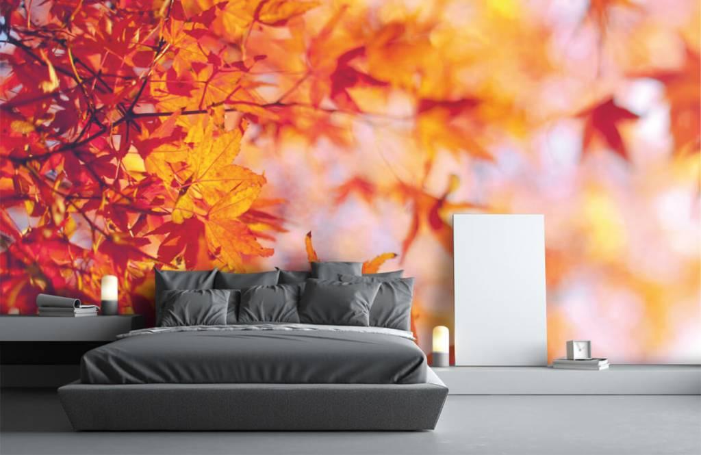 Leaves - Autumn leaves - Bedroom 2