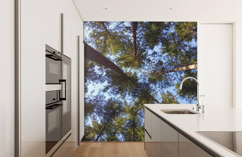 Forest wallpaper - High conifers - Bedroom 1