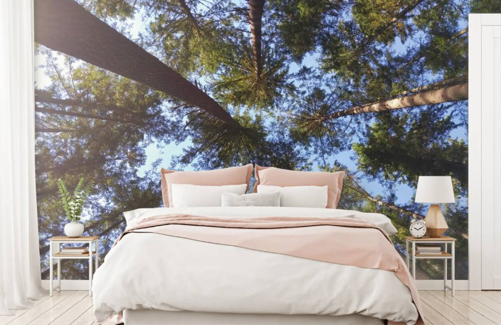 Forest wallpaper - High conifers - Bedroom 2