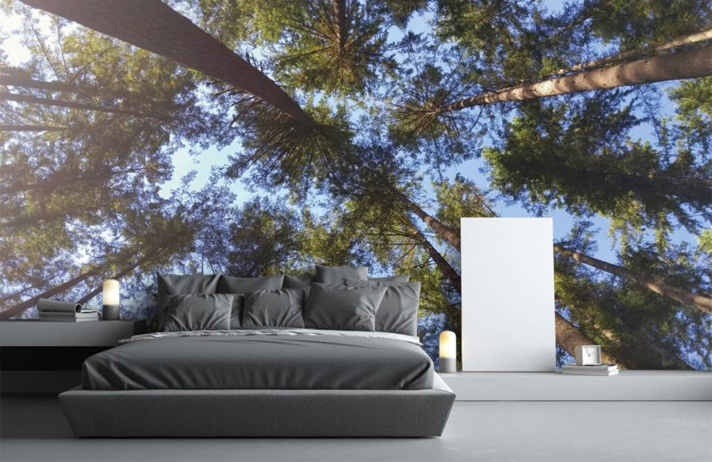 Forest wallpaper - High conifers - Bedroom 3