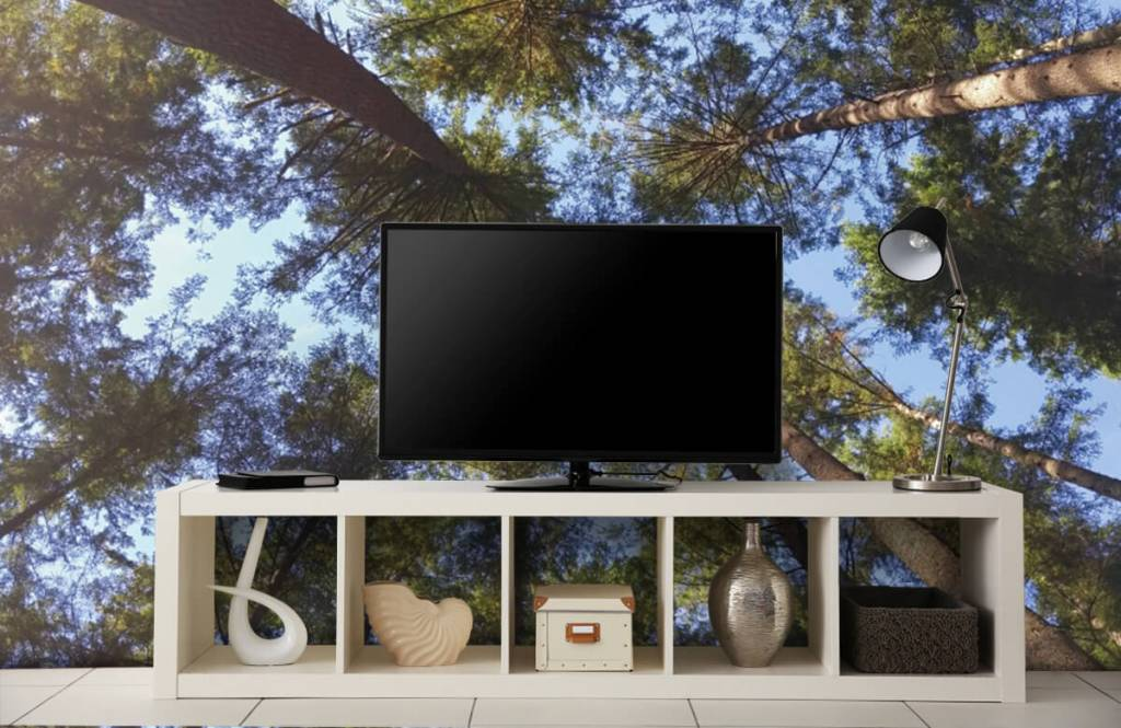 Forest wallpaper - High conifers - Bedroom 4