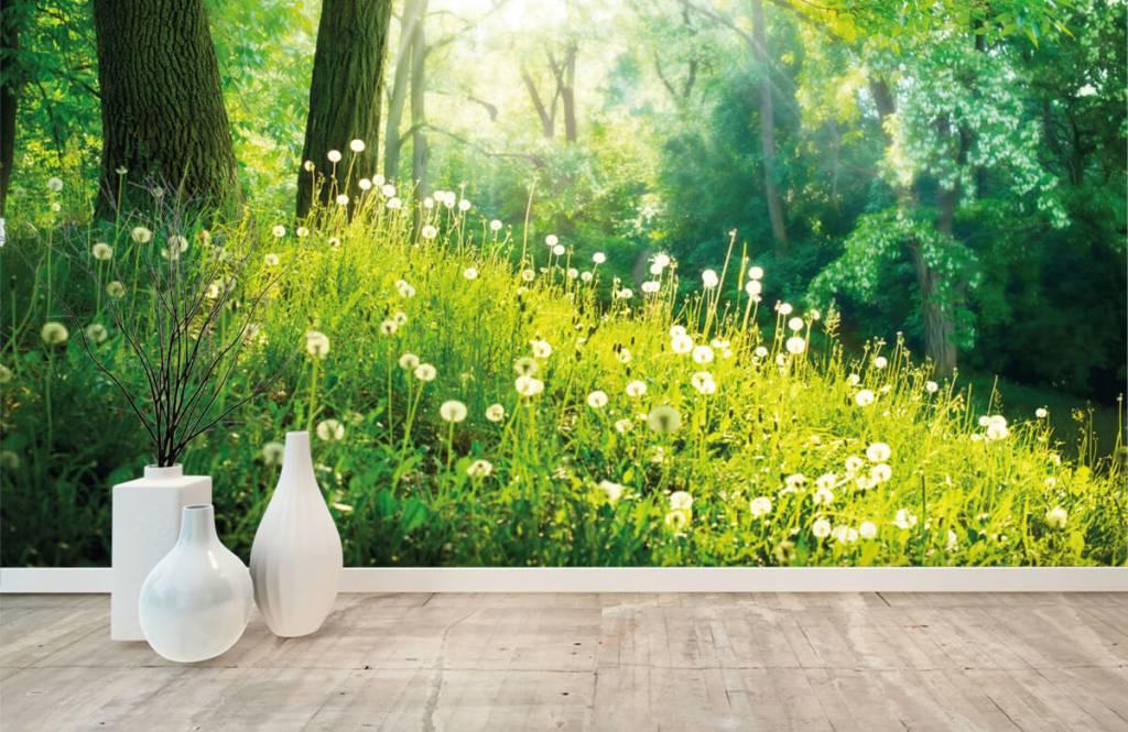 Forest wallpaper - Dandelions - Bedroom 8