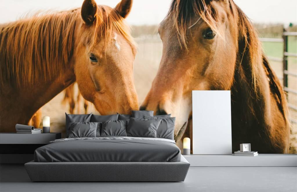 Horses - Two horses - Children's room 2