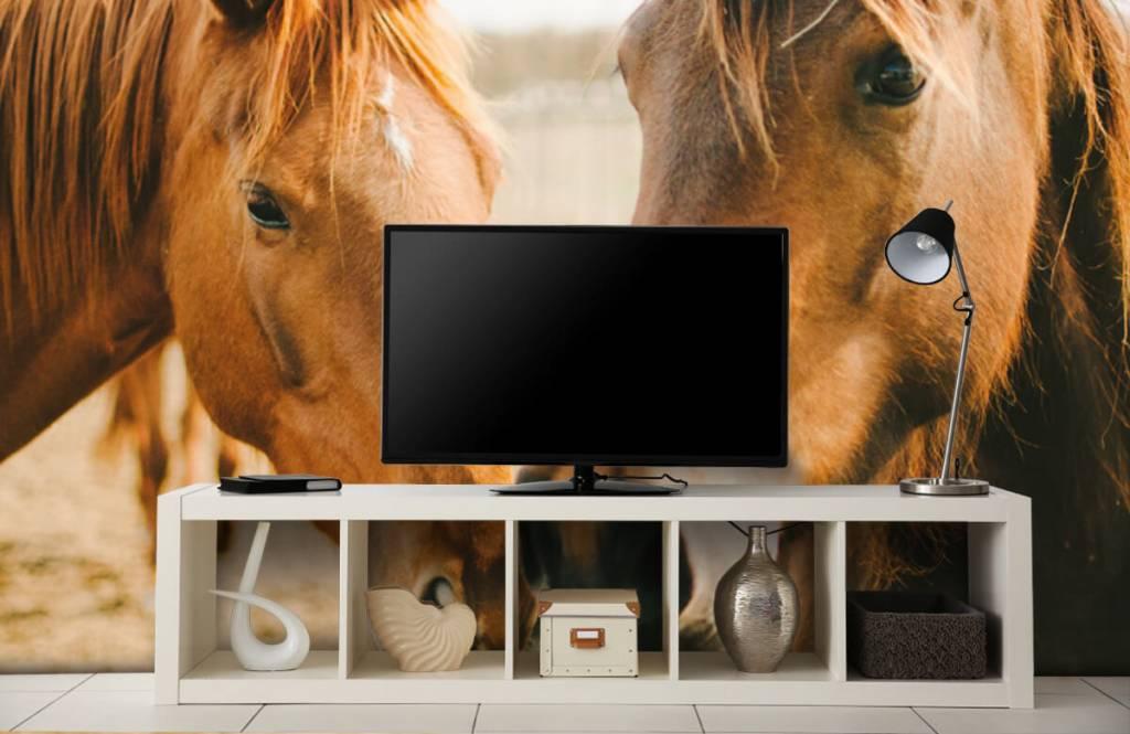 Horses - Two horses - Children's room 3