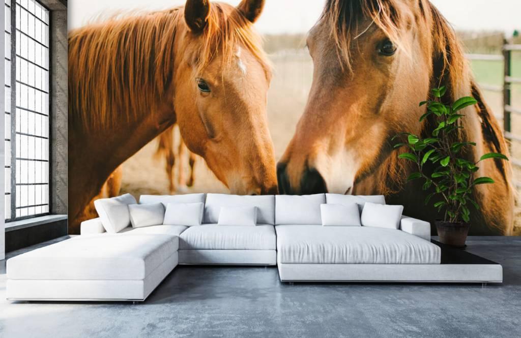 Horses - Two horses - Children's room 4