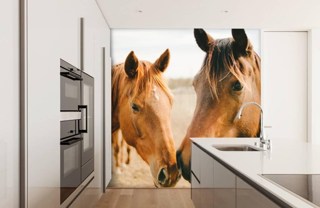 Horses - Two horses - Children's room 7