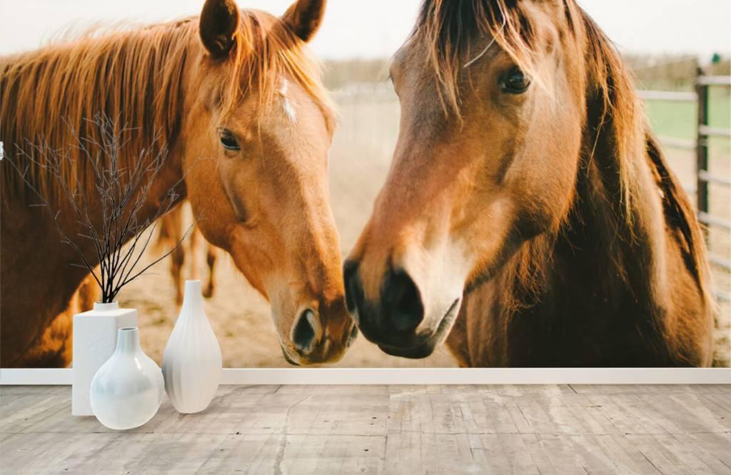 Horses - Two horses - Children's room 8