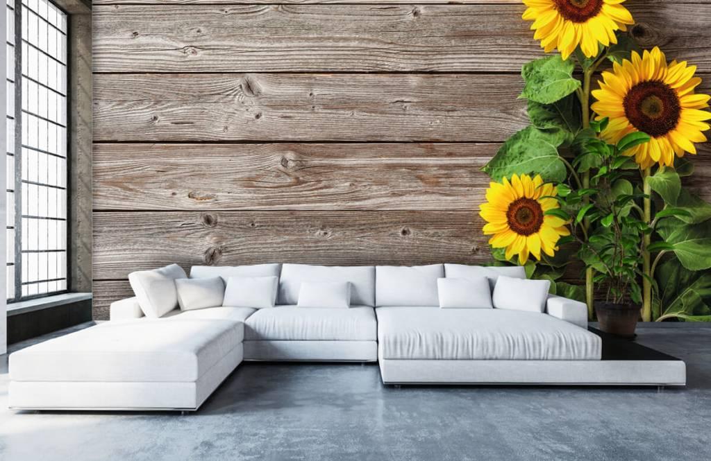 Sunflower - Sunflowers and wood - Garage 5