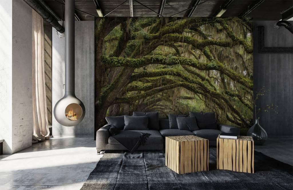 Forest wallpaper - Oak trees - Bedroom 1