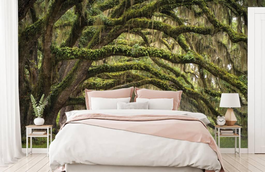 Forest wallpaper - Oak trees - Bedroom 2