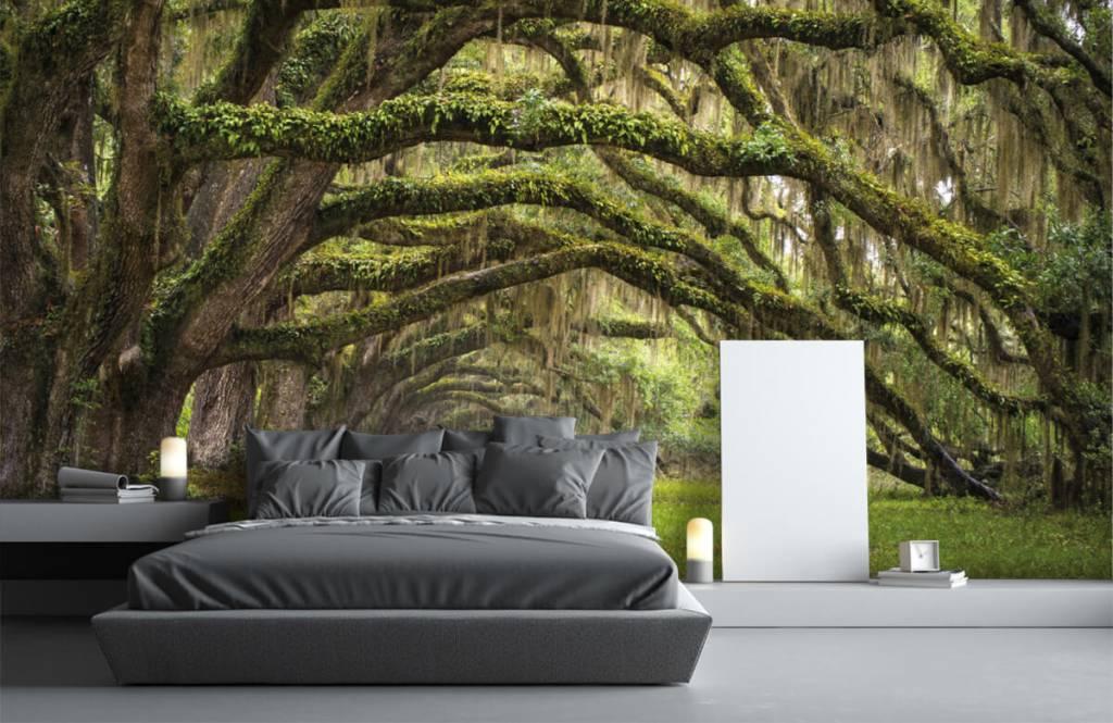 Forest wallpaper - Oak trees - Bedroom 3