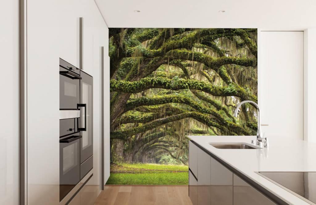 Forest wallpaper - Oak trees - Bedroom 4