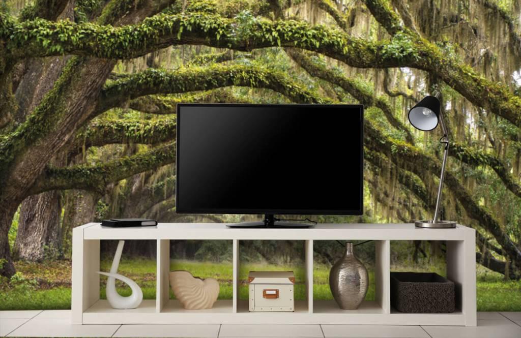 Forest wallpaper - Oak trees - Bedroom 5