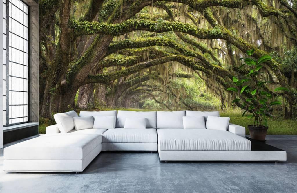 Forest wallpaper - Oak trees - Bedroom 6