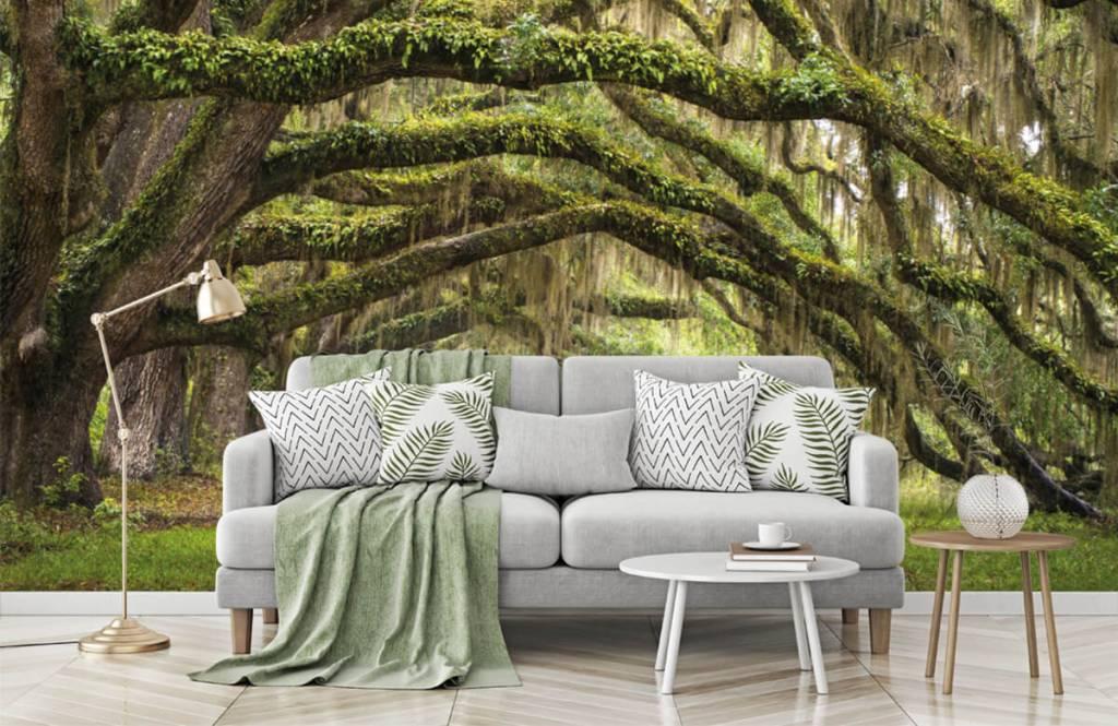 Forest wallpaper - Oak trees - Bedroom 7