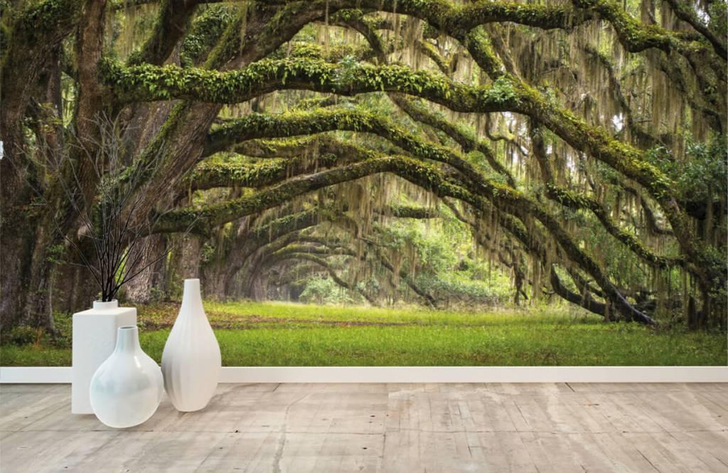 Forest wallpaper - Oak trees - Bedroom 8