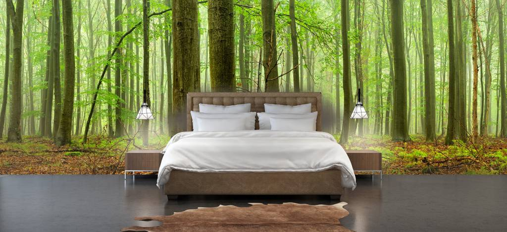 Forest wallpaper - Forest of beech trees - Conference room 3