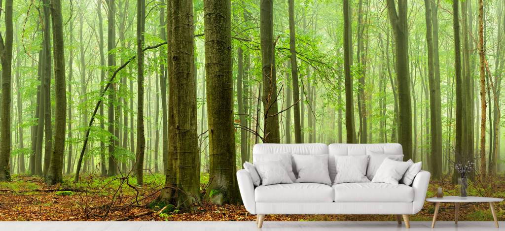 Forest wallpaper - Forest of beech trees - Conference room 4