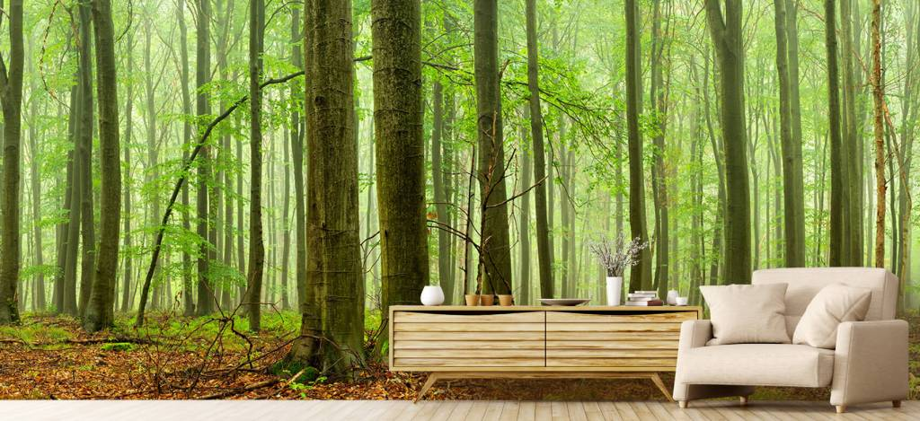 Forest wallpaper - Forest of beech trees - Conference room 5