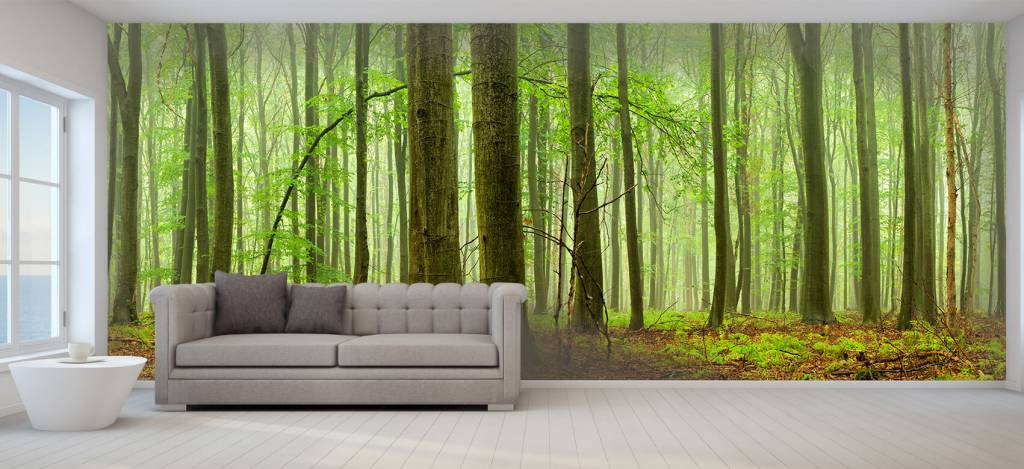 Forest wallpaper - Forest of beech trees - Conference room 6