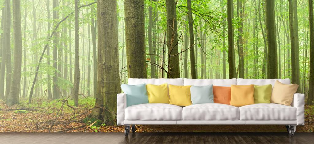Forest wallpaper - Forest of beech trees - Conference room 7