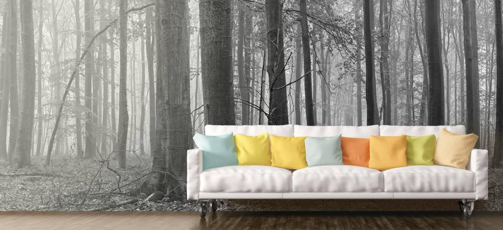 Forest wallpaper - Forest of beech trees - Conference room 8