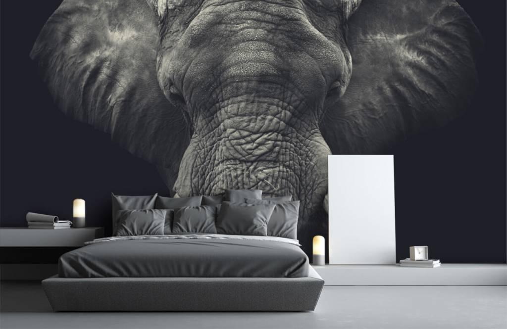 Elephants - Close-up of an elephant - Bedroom 1