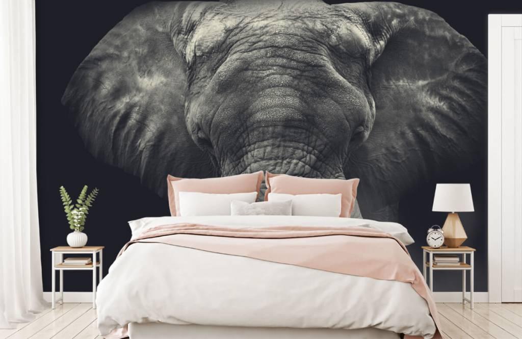 Elephants - Close-up of an elephant - Bedroom 2