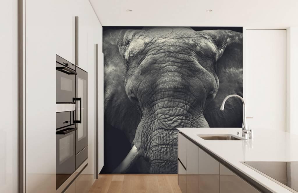 Elephants - Close-up of an elephant - Bedroom 3