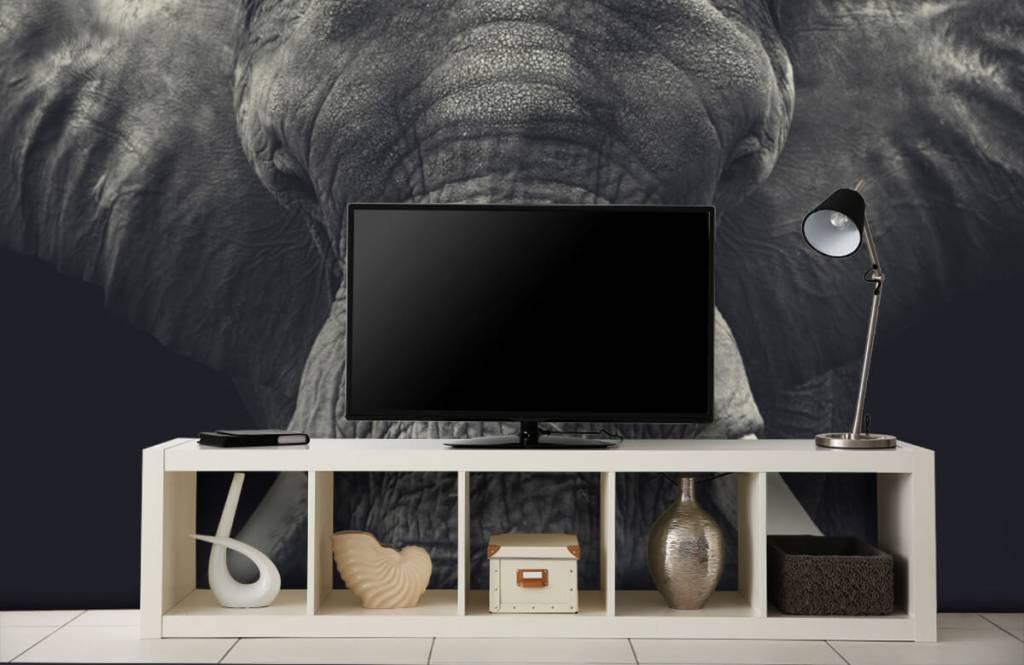 Elephants - Close-up of an elephant - Bedroom 4
