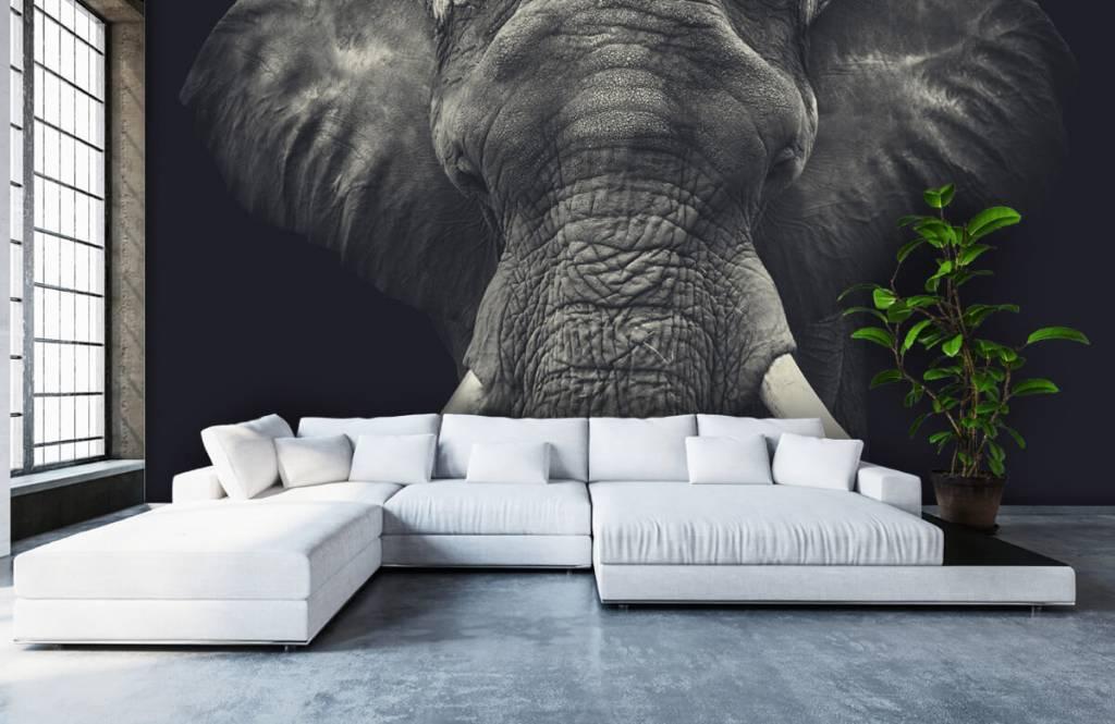 Elephants - Close-up of an elephant - Bedroom 5