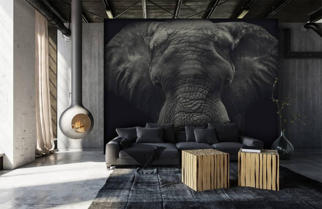 Elephants - Close-up of an elephant - Bedroom 6