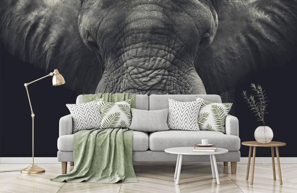 Elephants - Close-up of an elephant - Bedroom 7