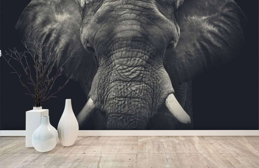 Elephants - Close-up of an elephant - Bedroom 8