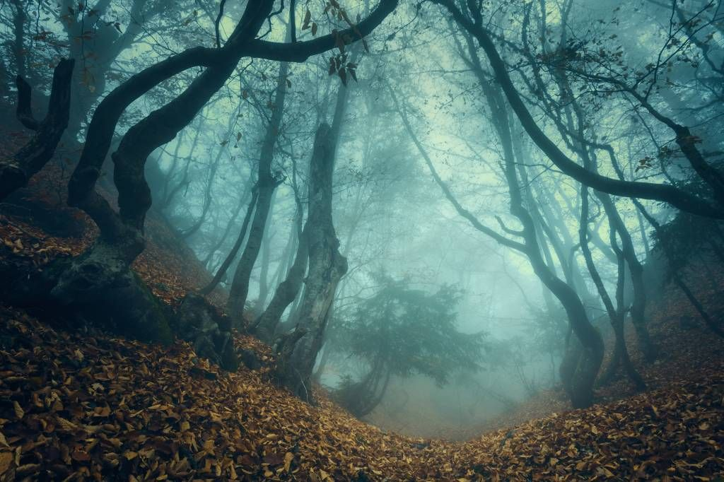 Forest wallpaper - Mysterious forest - Bedroom
