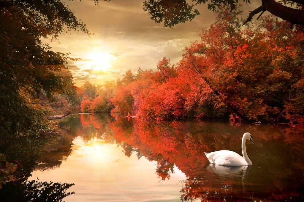 Lakes and Waters - Swan - Hallway