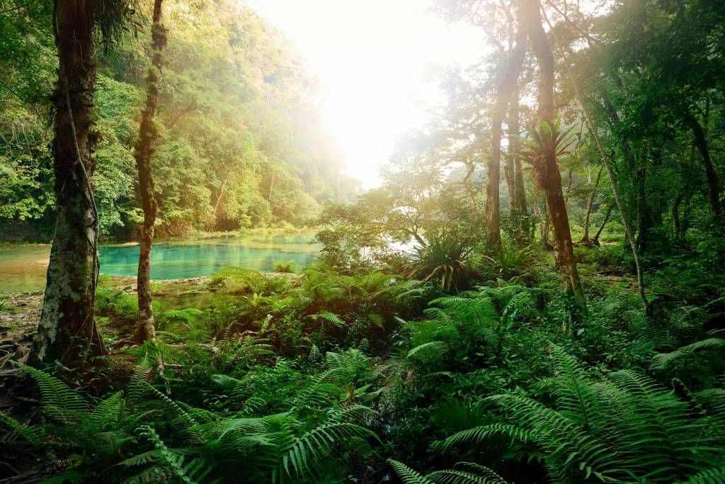 Forest wallpaper - Lake in the jungle - Bedroom