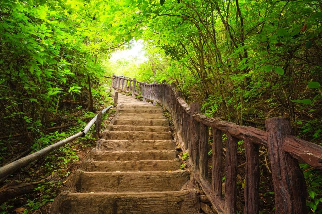 Forest wallpaper - Stairs in a forest - Bedroom
