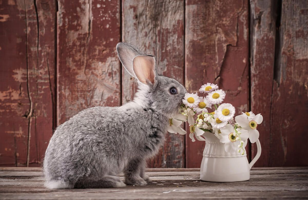 Wallpaper Rabbit with daisies